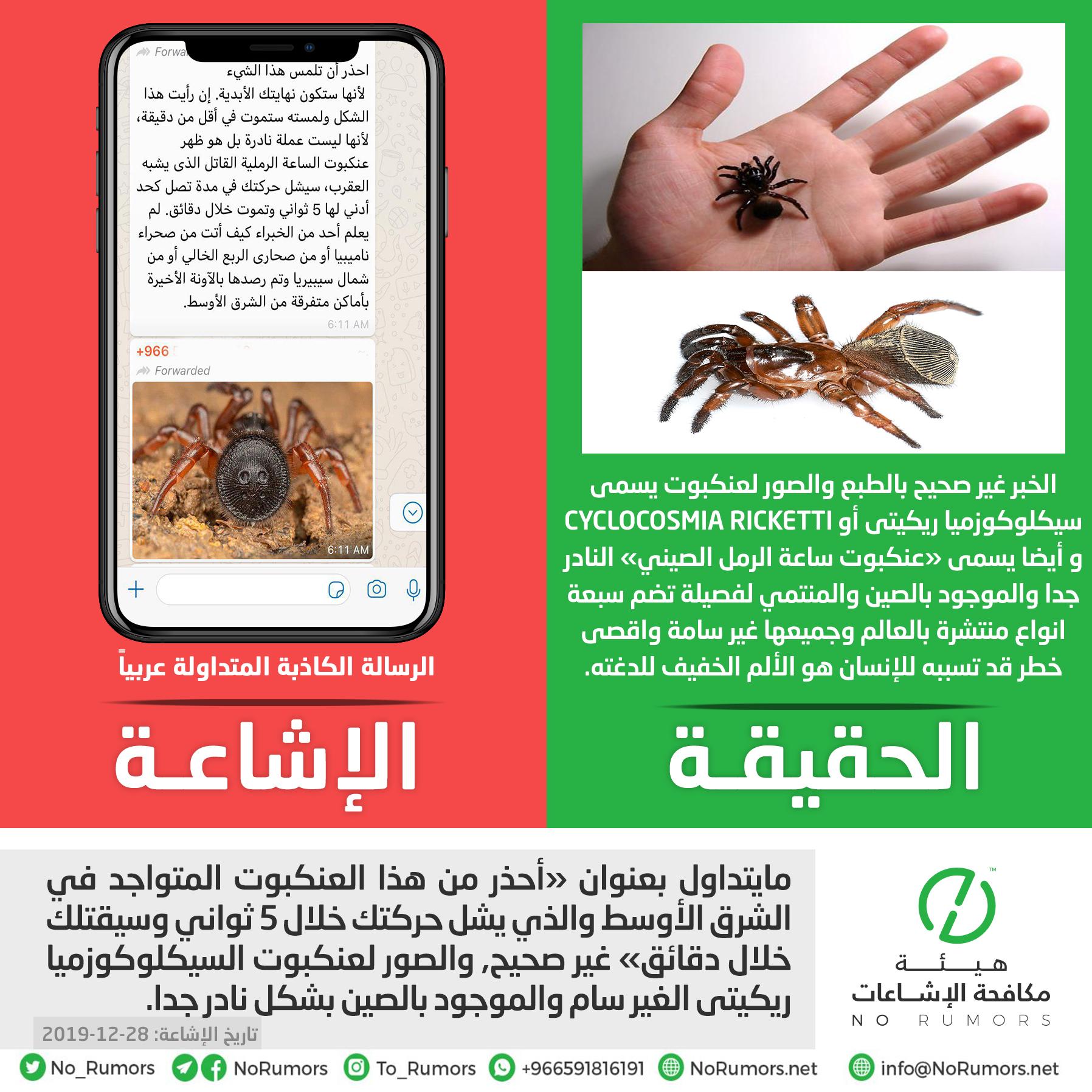 حقيقة مايتداول مجدداً بعنوان «أحذر من هذا العنكبوت المتواجد في الشرق الأوسط والذي يشل حركتك خلال 5 ثواني وسيقتلك خلال دقائق»
