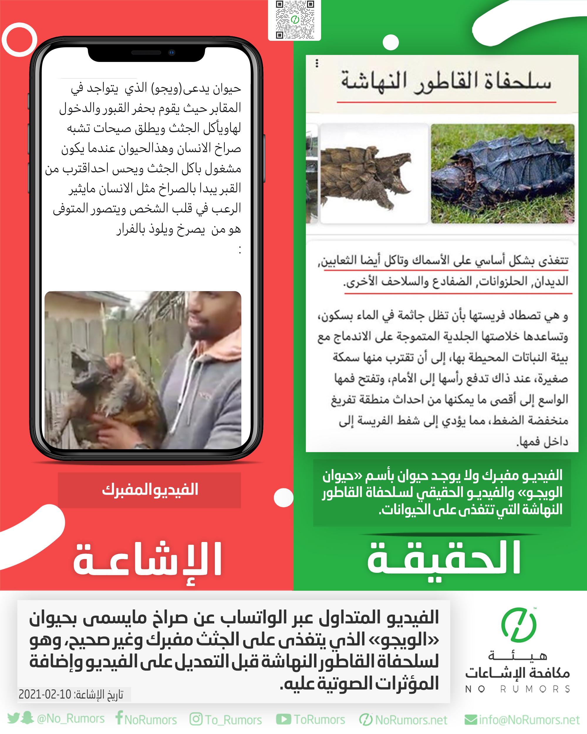 حقيقة الفيديو المتداول عبر الواتساب عن صراخ مايسمى بحيوان «الويجو»